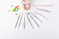 假牙模型护齿工具图片
