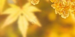 秋天黄树叶图片