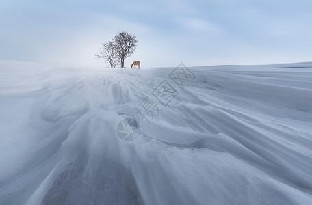 美丽的冬日巩乃斯图片