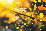 秋天落叶图片
