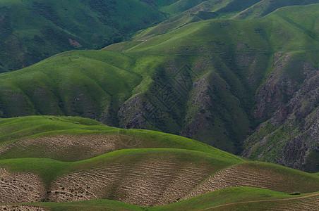 新疆喀拉峻人体草原图片