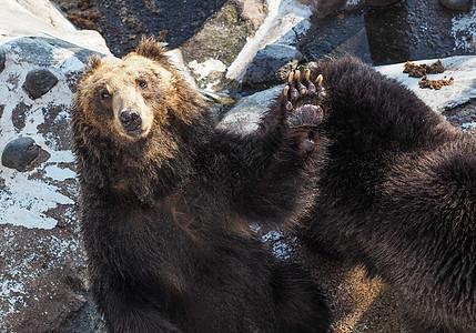北海道登别熊牧场图片
