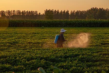 夕阳下的农民图片