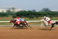 速度赛马图片