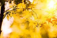 秋天美景501036100图片
