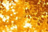 秋天美景图片