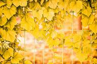 秋季美景图片