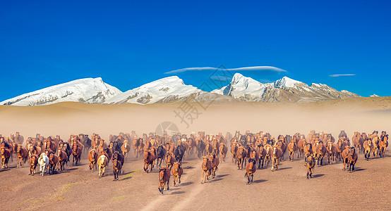 雪山下奔跑的马群图片