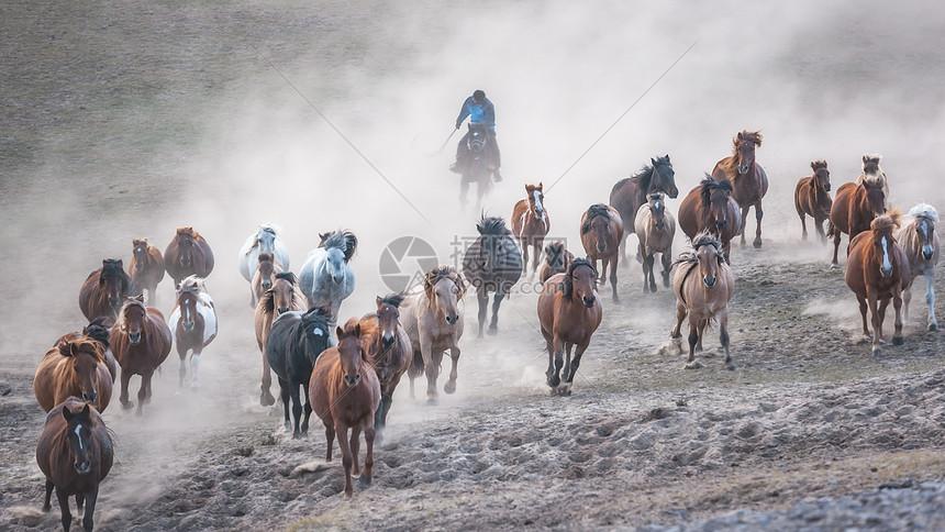 内蒙古坝上风光万马奔腾图片