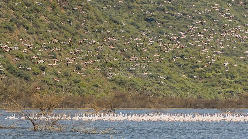 肯尼亚野生鸟群图片