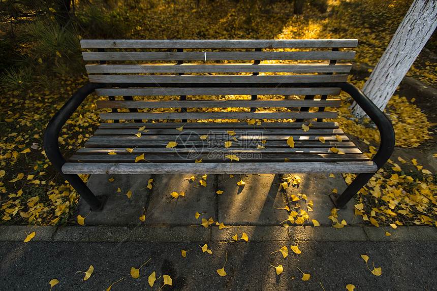 奥林匹克森林公园的落叶图片