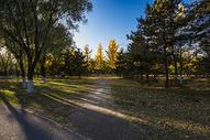 奥林匹克森林公园的秋色501040308图片