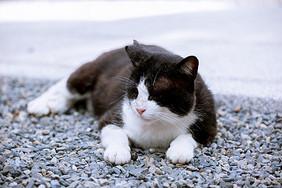 慵懒猫咪图片