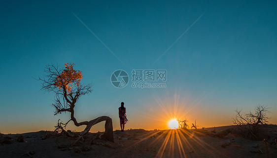 夕阳西下胡杨林图片