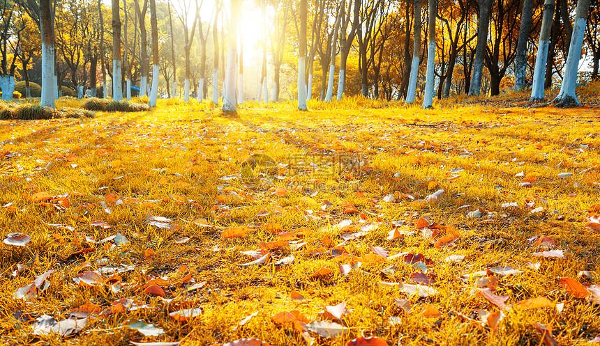 秋天树叶图片