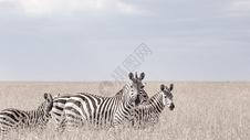 非洲肯尼亚野生动物图片