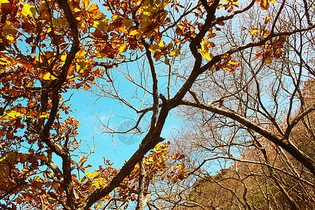 秋天的树林里秋意浓浓图片