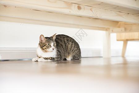 床底下的猫图片