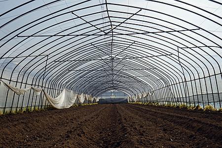 蔬菜大棚未灌溉插秧图片