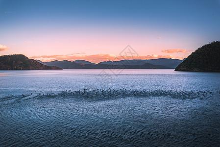 海鸟天堂图片