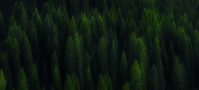 多木成林图片