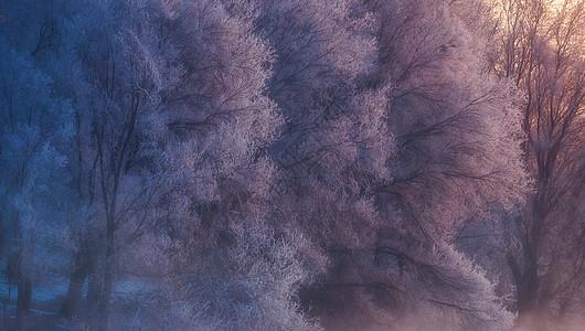 雾凇之晨图片