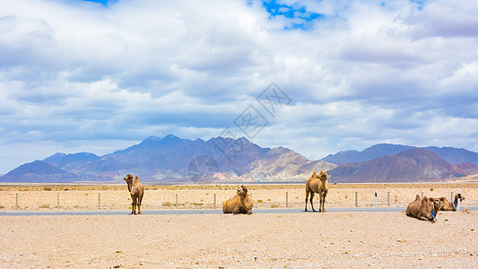 青海省海西蒙古族藏族自治州茶卡盐湖骆驼图片