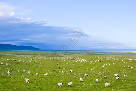 青藏公路沿途风光和羊群图片
