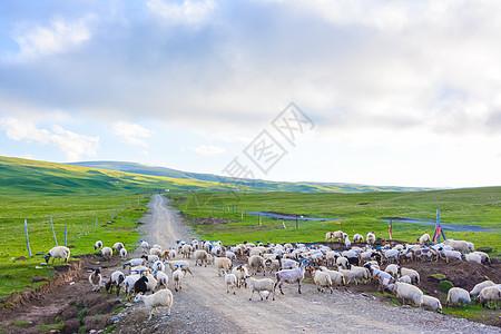 青藏公路沿途风光图片