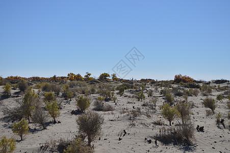 额济纳旗沙漠图片
