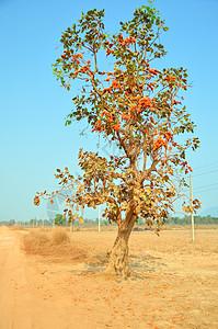 老挝自然风光图片