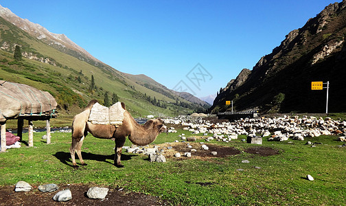 大美新疆唐布拉百里画廊图片