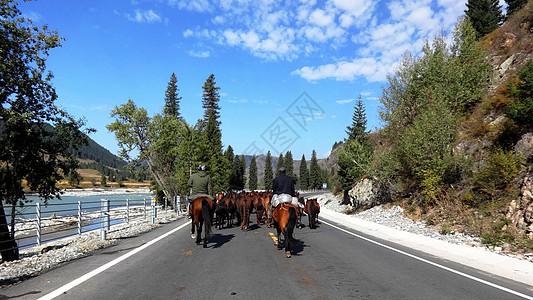大美新疆唐布拉百里画廊公路上的牛群图片