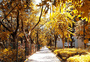 秋天金黄色的道路树叶和草地唯美的美景图片