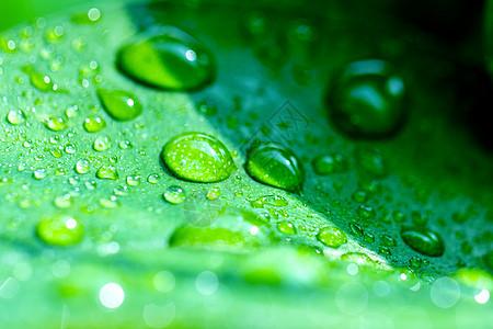 水珠 水滴图片