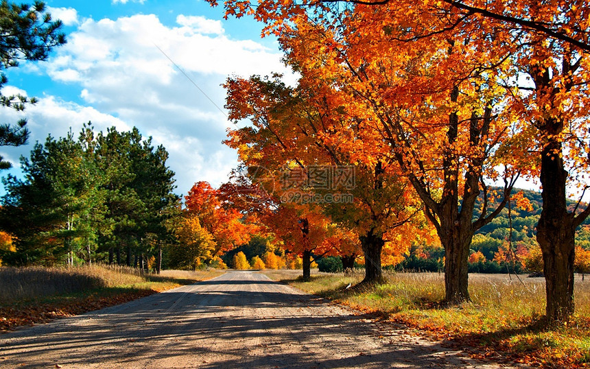秋天的道路与树图片
