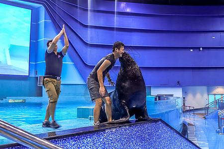 南昌万达海洋乐园海狮表演图片