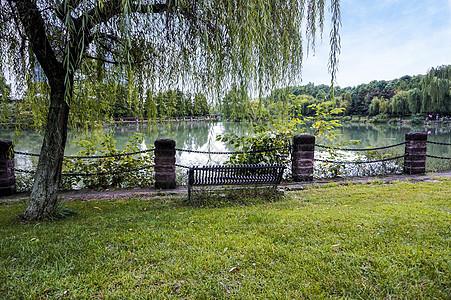 柳树下的椅子图片