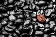 咖啡豆501066741图片