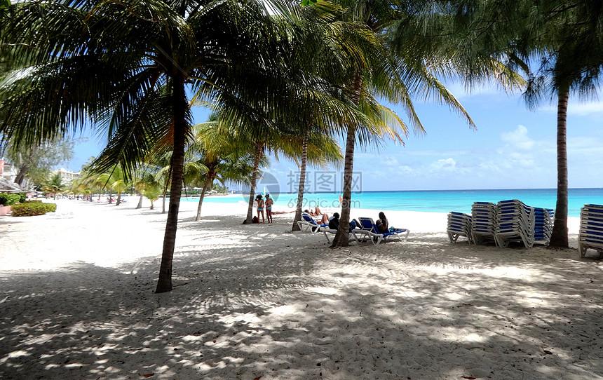 巴巴多斯海边的林荫好惬意图片