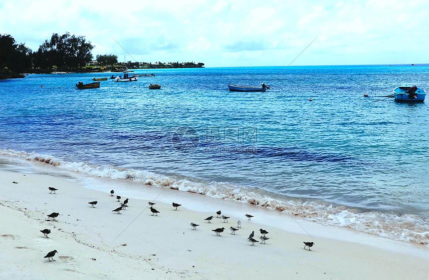 巴巴多斯海滩海鸟海风海韵图片