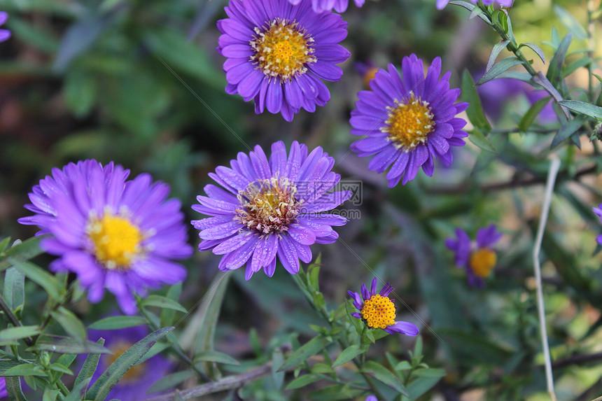 秋天的植物图片
