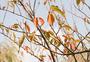 秋日物语之树染枝头图片