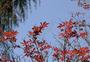 满山红叶图片