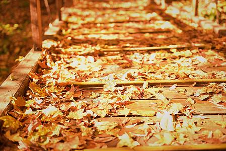 秋日里的树叶图片