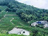 西湖龙井村图片