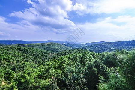 云南澄江帽天山自然保护区图片