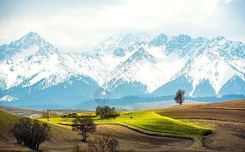 雪山下的农田图片