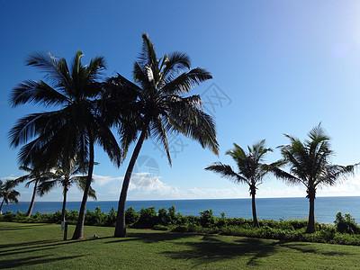 莫桑比克海峡风光蓝天椰树海风图片