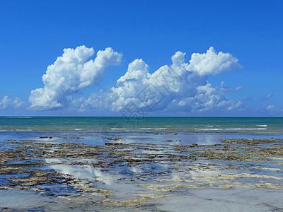 莫桑比克海峡风光珊瑚滩涂退潮后图片
